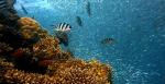 le-fonds-dws-concept-esg-blue-economy-sur-la-protection-des-oceans